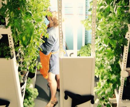 Brighterside Vertical Farms - High-density vertical rack for indoor vegetable farm